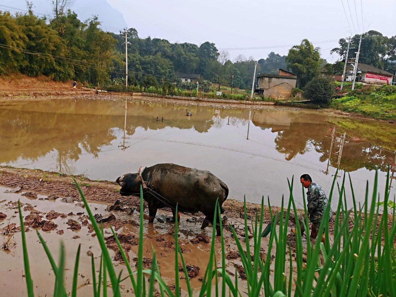 农村治理现代化进程中的农民问题