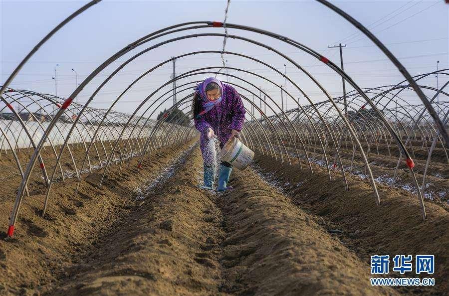 贺雪峰:务工还是务农,是一个问题