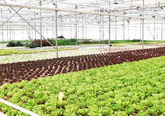 桂华:农业投资处处都是陷阱